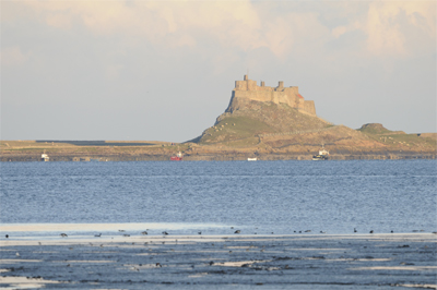 Lindisfarne Castle and Pale-bellied Brent Geese