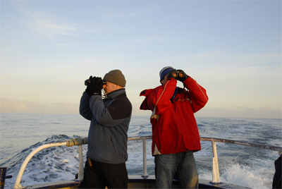 Martin and Tom scanning for cetaceans