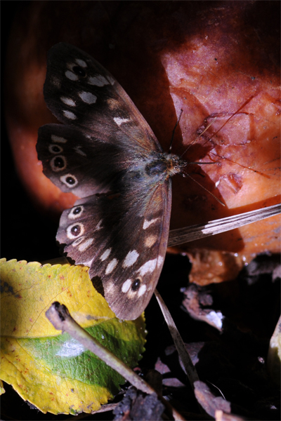 Butterflies, photography, macro photography tuition