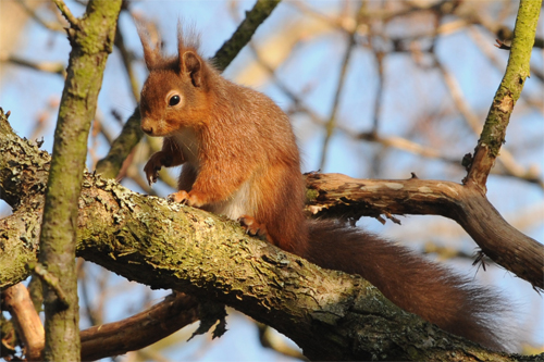 Red Squirrel, mammal photography, photography tuition, photogarphy courses, photography holidays