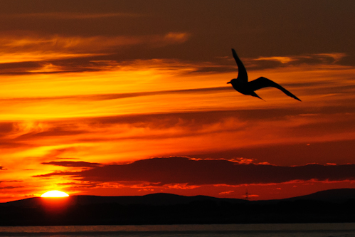Sunset,North Sea,Northumberland,North Sea pelagics,dolphin watching Northumberland,whale watching Northumberland