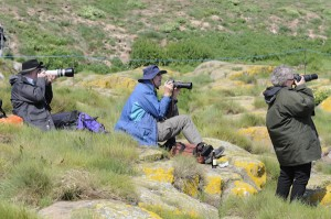 Photography tuition Northumberland,photography courses Northumberland,bespoke photography Northumberland,Farne Islands,Northumberland