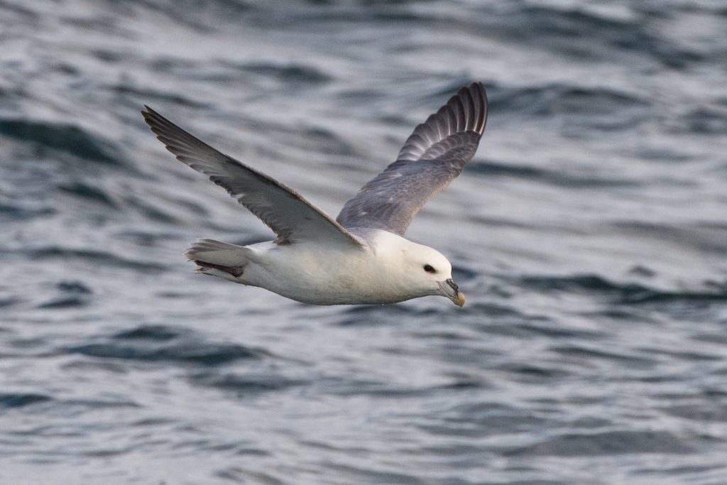 Our 4hr evening pelagic trips sail from Royal Quays marina and we search for whales, dolphins, porpoises and seabirds while enjoying spectacular views of the beautiful Northumberland coast