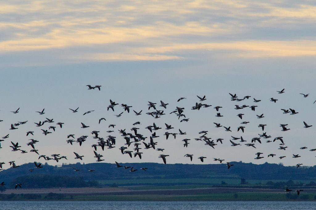 Our Holy island and Northumberland coast bespoke photography tour brought lots of birds in reach of our cameras