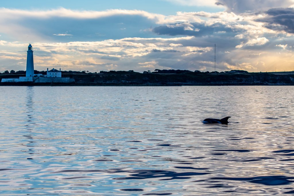 White-beaked Dolphin, Lagenorhynchus albirostris,Northumberland,dolphin spotting, dolphin spotting Northumberland, dolphin spotting UK, dolphin spotting England, dolphin spotting North Sea, whale watching Northumberland, whale watching UK, whale watching England, whale watching North Sea